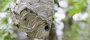 Raid® How do I get rid of wasps/hornets/yellow jackets?
