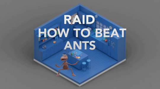 Raid How to Beat Ants